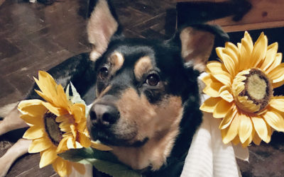 Dog dressed up with two sunflowers at Princess Christian Care Home